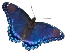 Blue Green Butterfly Rollover